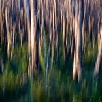 Paperbark Swamp