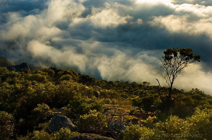 Victoria & South Australia