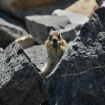 Squirrel in Rocks