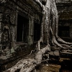 Nature Takes Over at Ta Phrom