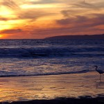 Sunset with Egret